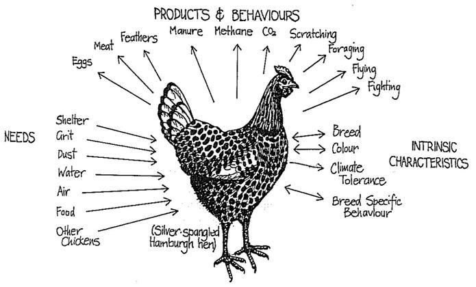 Poultry Business plan on